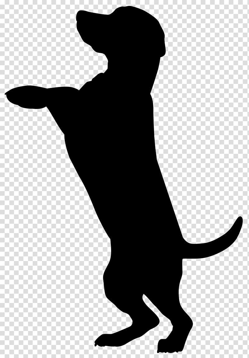 Scotch Collie Cat Silhouette , Dog Silhouette , silhouette.