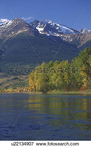 Picture of Skeena River in autumn with golden trees and Skeena.