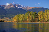 Stock Image of Skeena River in autumn with golden trees and Skeena.