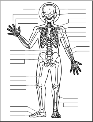 Clip art: Human Anatomy: Skeletal System B&W Unlabeled I.