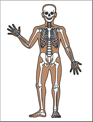Clip Art: Human Anatomy: Skeletal System Color Blank I.