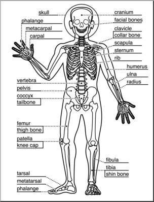 Clip Art: Human Anatomy: Skeletal System B&W Labeled I.
