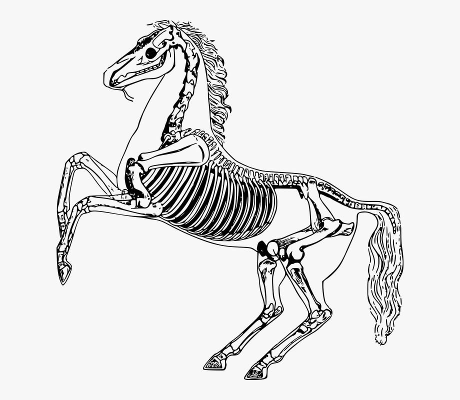 Transparent Skeleton Arm Png.