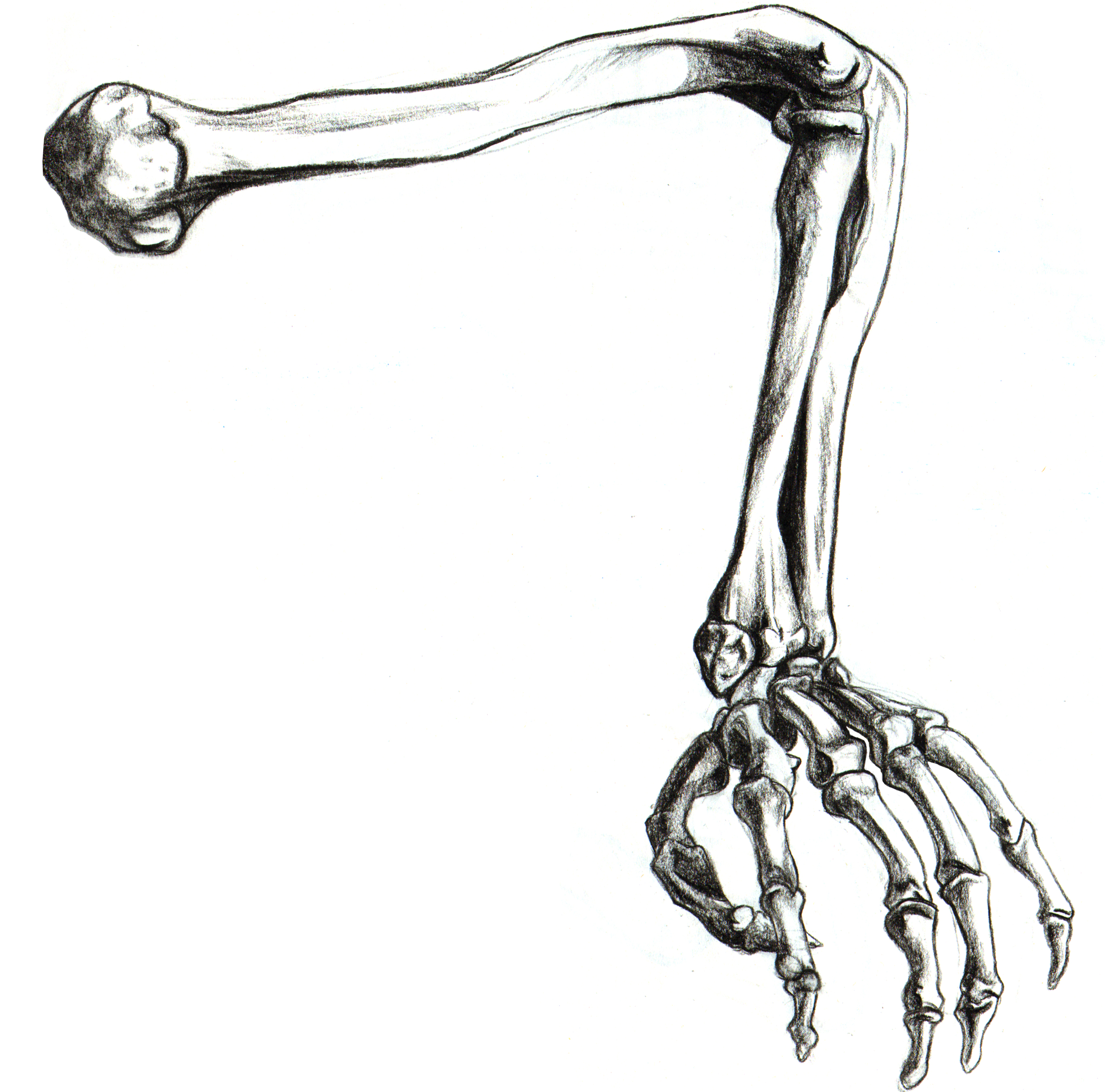 Free Skeleton Arm, Download Free Clip Art, Free Clip Art on.