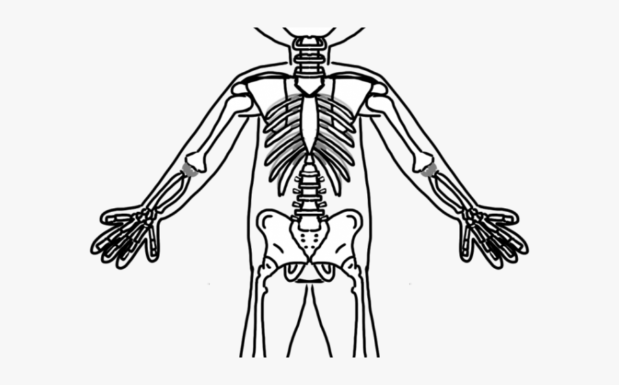 Bones Clipart Friendly Skeleton.