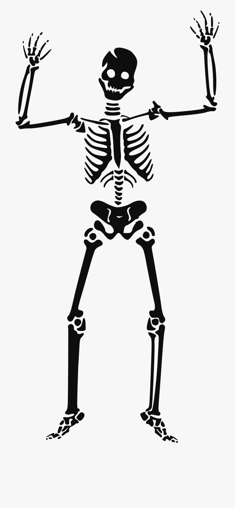 Skeleton Clipart Transparent.