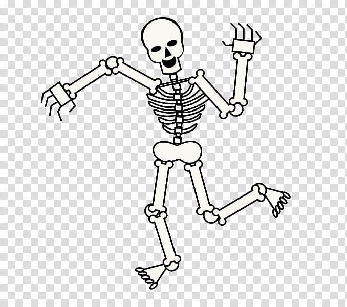 Human skeleton Drawing Cartoon Skull, Skeleton transparent.