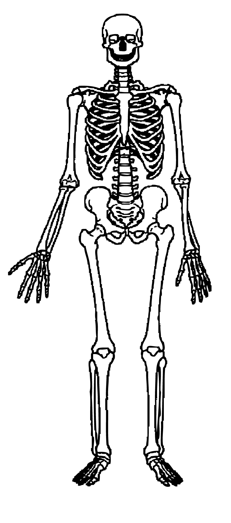 Skeleton clipart free download clip art on 4.