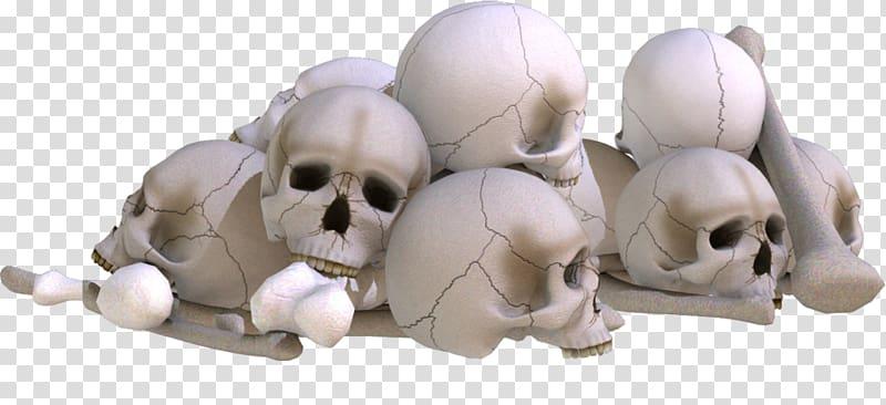 Skull editing PicsArt Studio, skull transparent background.