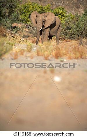 Stock Illustration of Elephants in the Skeleton Coast Desert.