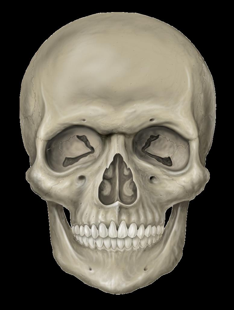 Skeleton Head PNG Transparent Images.