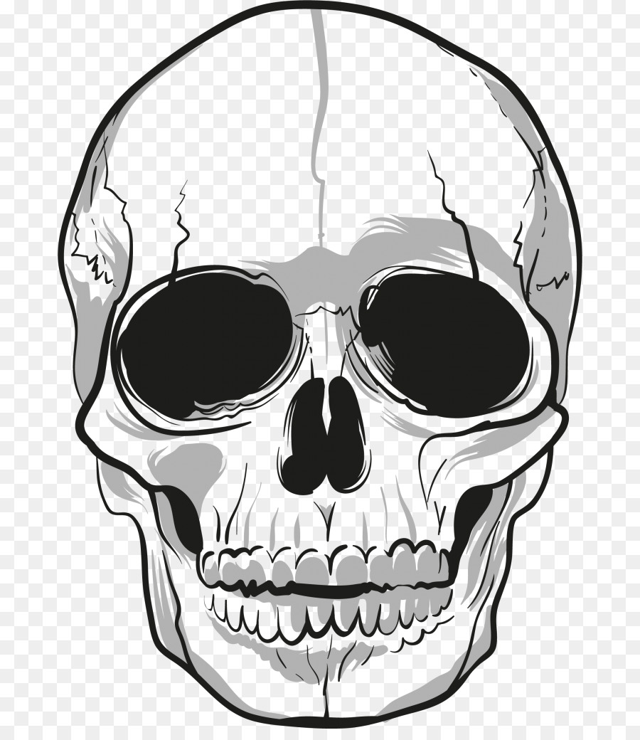 Skull Clipart png download.