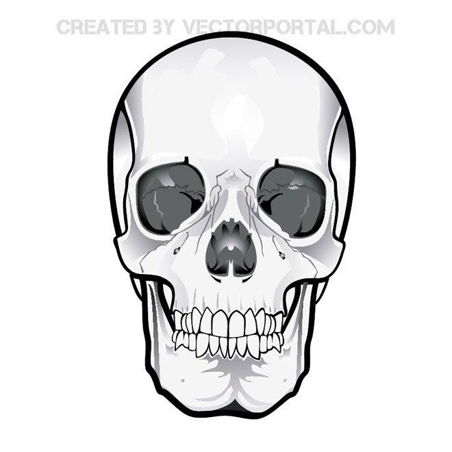 Human Skeleton Clipart.