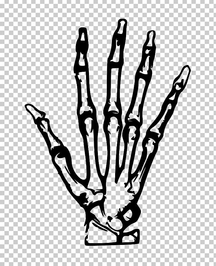 Human Skeleton Hand PNG, Clipart, Anatomy, Black And White.