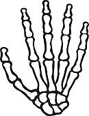human skeleton hand.