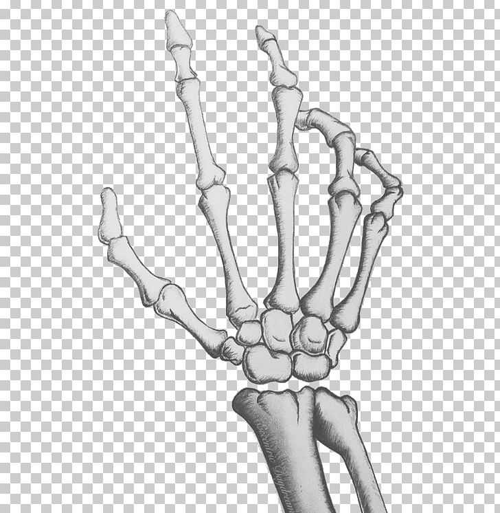 Human Skeleton Skull Bone Hand PNG, Clipart, Anatomy, Arm.