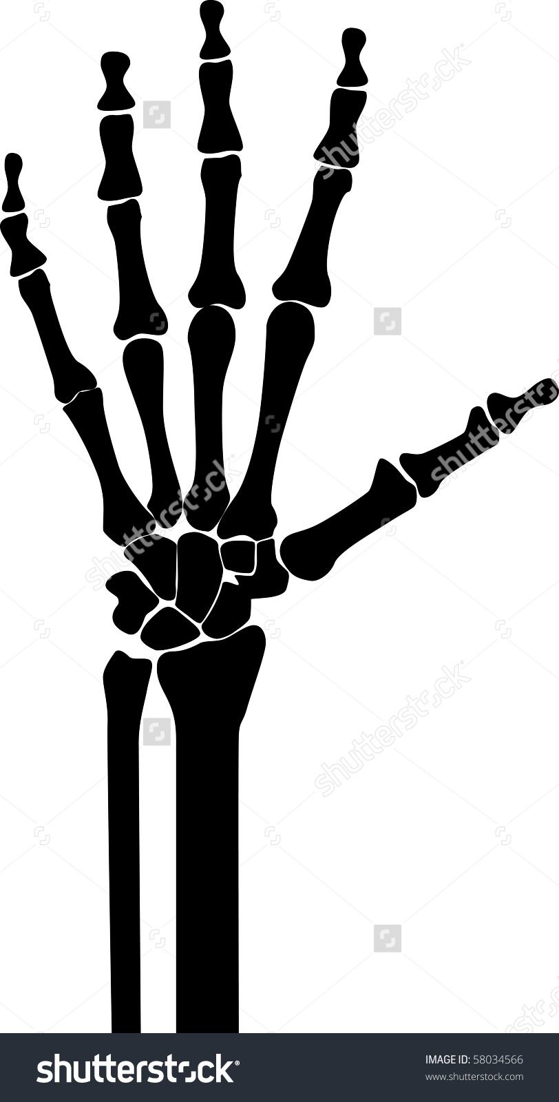 Skeleton Hand and Arm Clip Art.