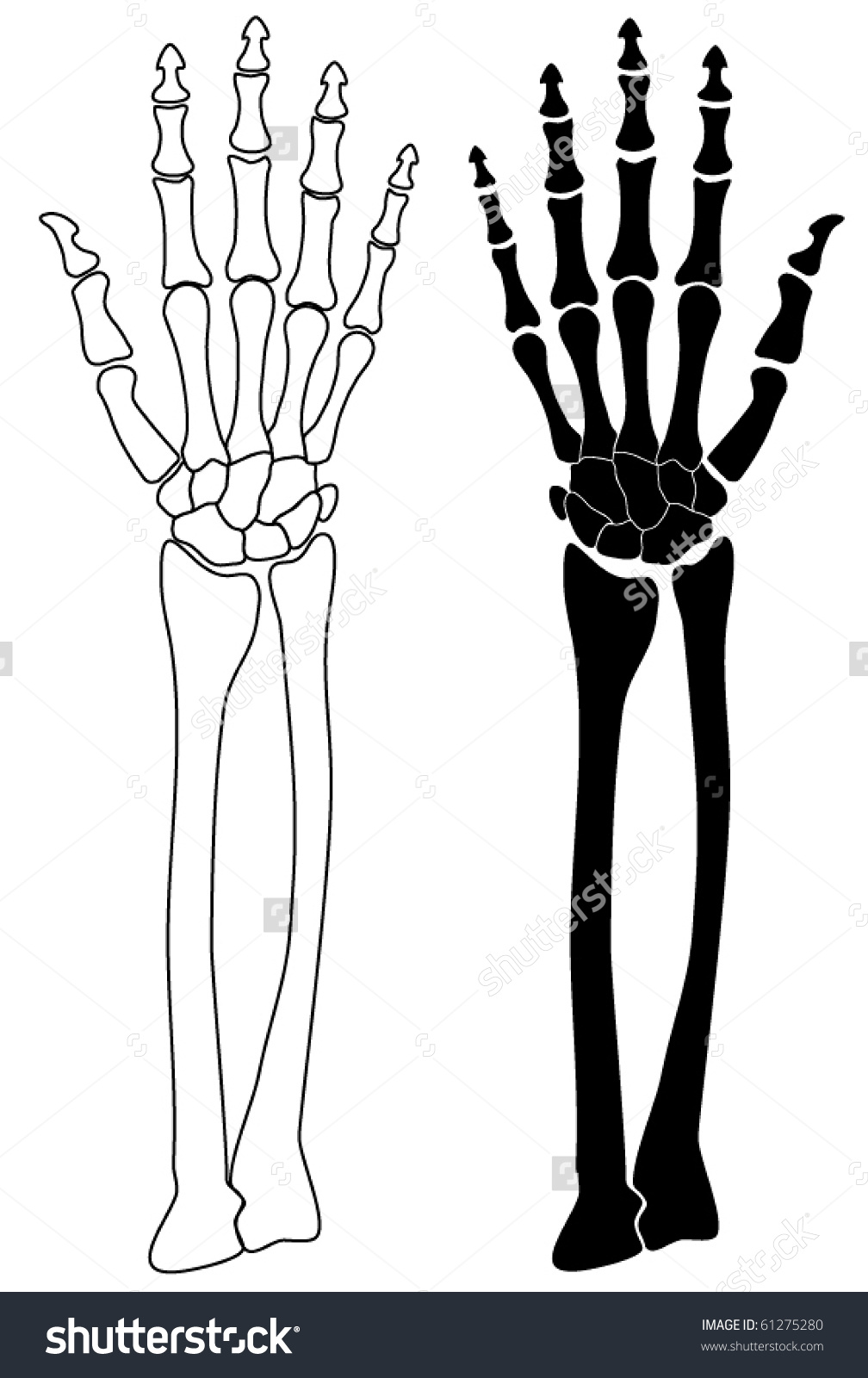 Human Skeleton Hand Drawing Crazywidowfo