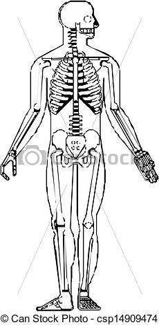 Vectors Illustration of Human Skeleton.