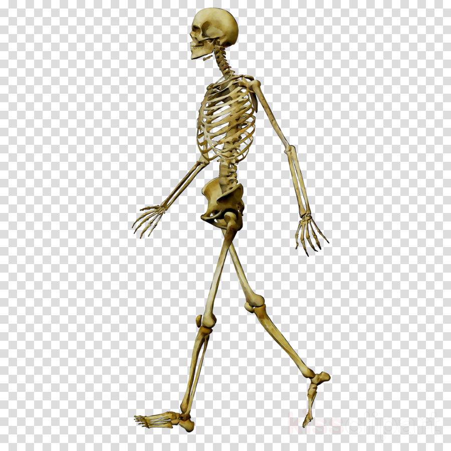 skelton clipart 10 free Cliparts | Download images on ...