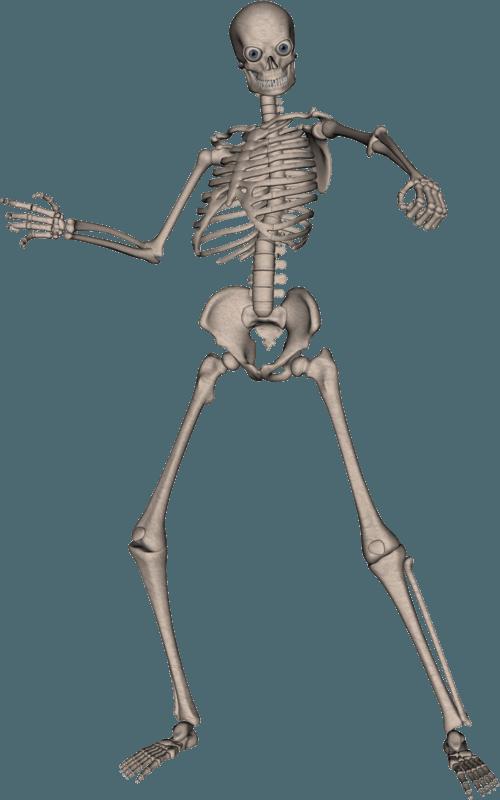 Skeleton Png & Free Skeleton.png Transparent Images #207.