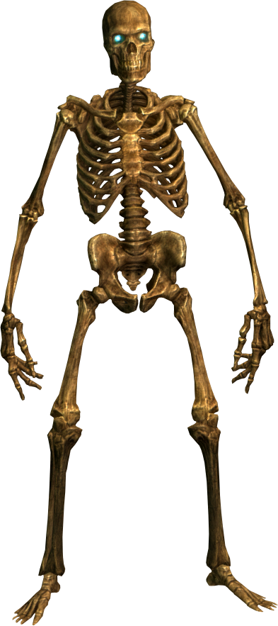 Download SKELETON Free PNG transparent image and clipart.