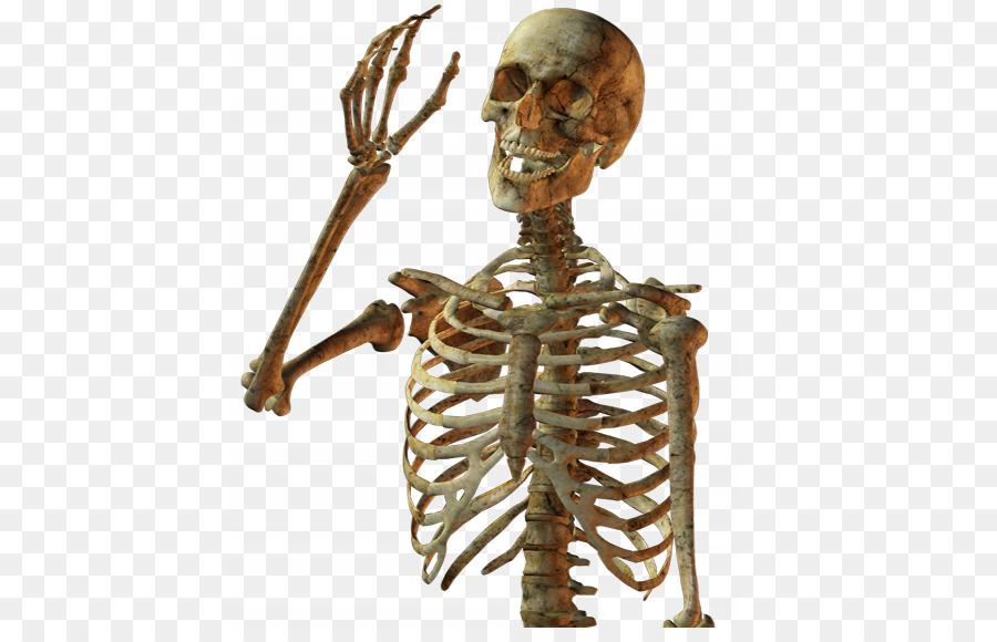 Calavera Skull Human Skeleton.