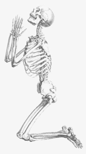 Skeleton PNG & Download Transparent Skeleton PNG Images for.