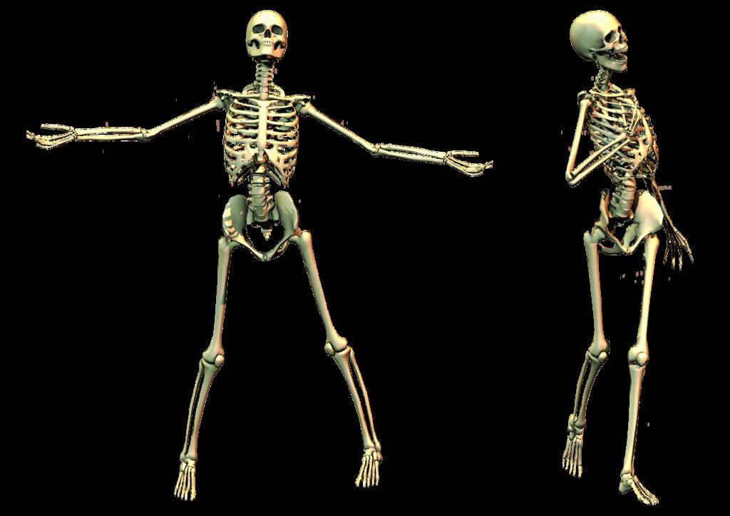 Skeleton, skulls PNG images free download.