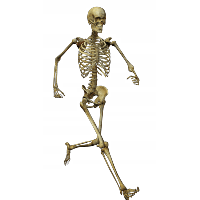 Download Skeleton Free PNG photo images and clipart.