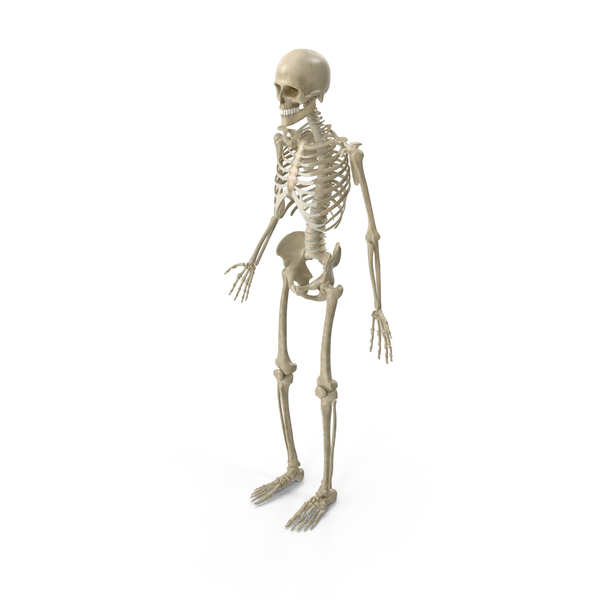 Skeleton PNG Images & PSDs for Download.