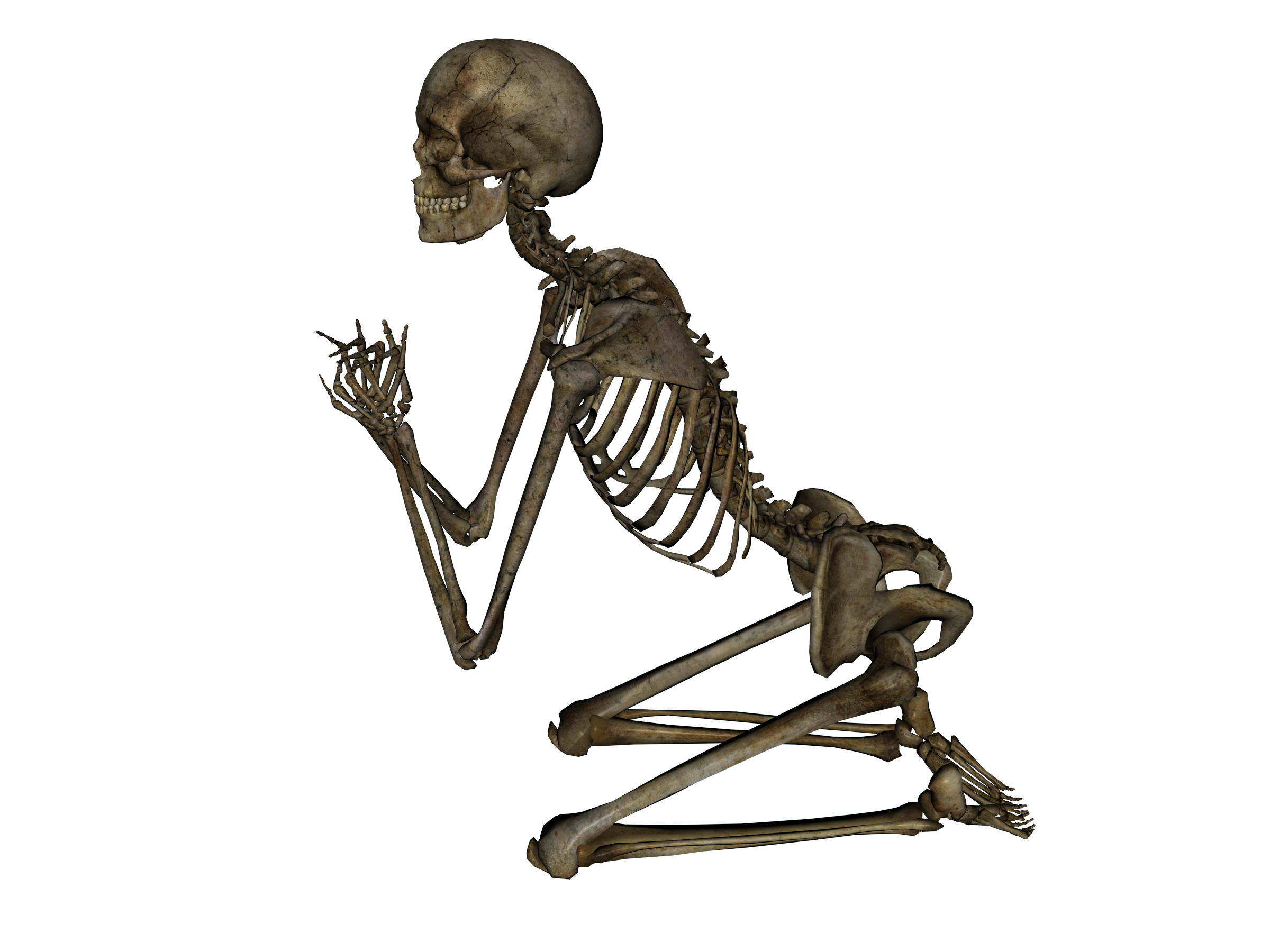 Skeleton, skulls PNG images free download.