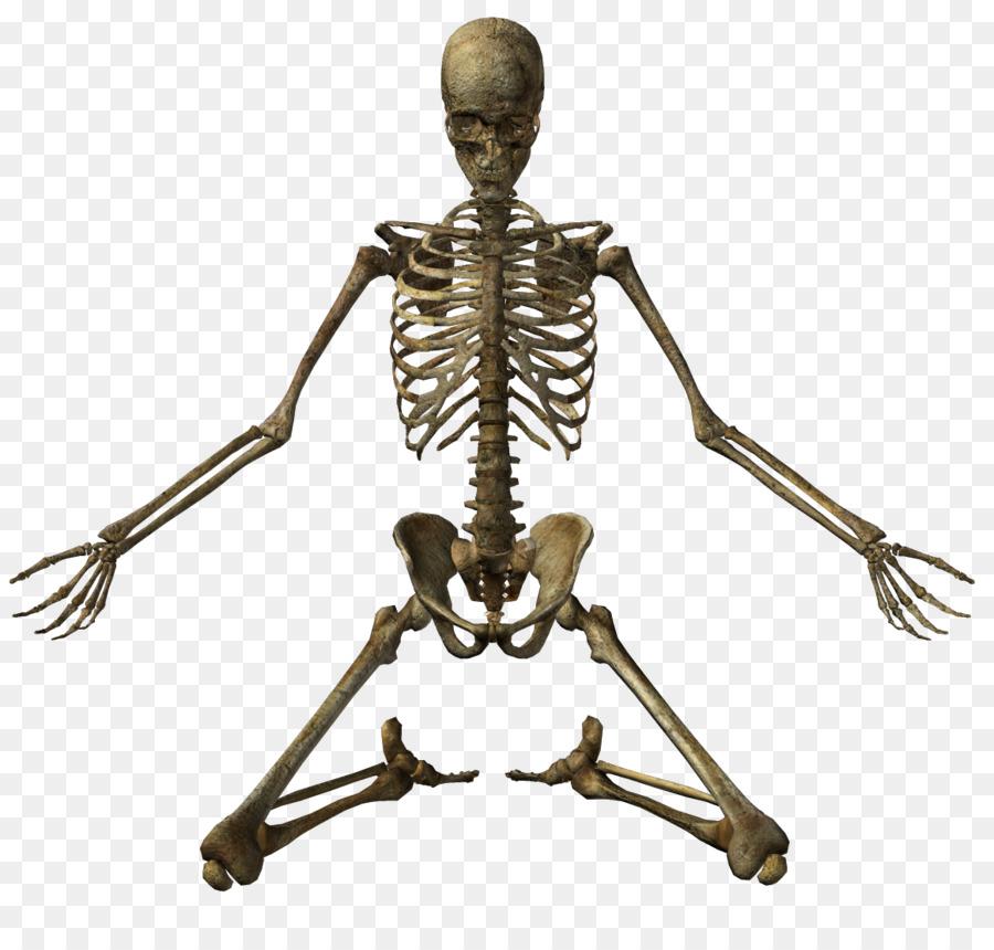 Human Skeleton Bone Clip Art.