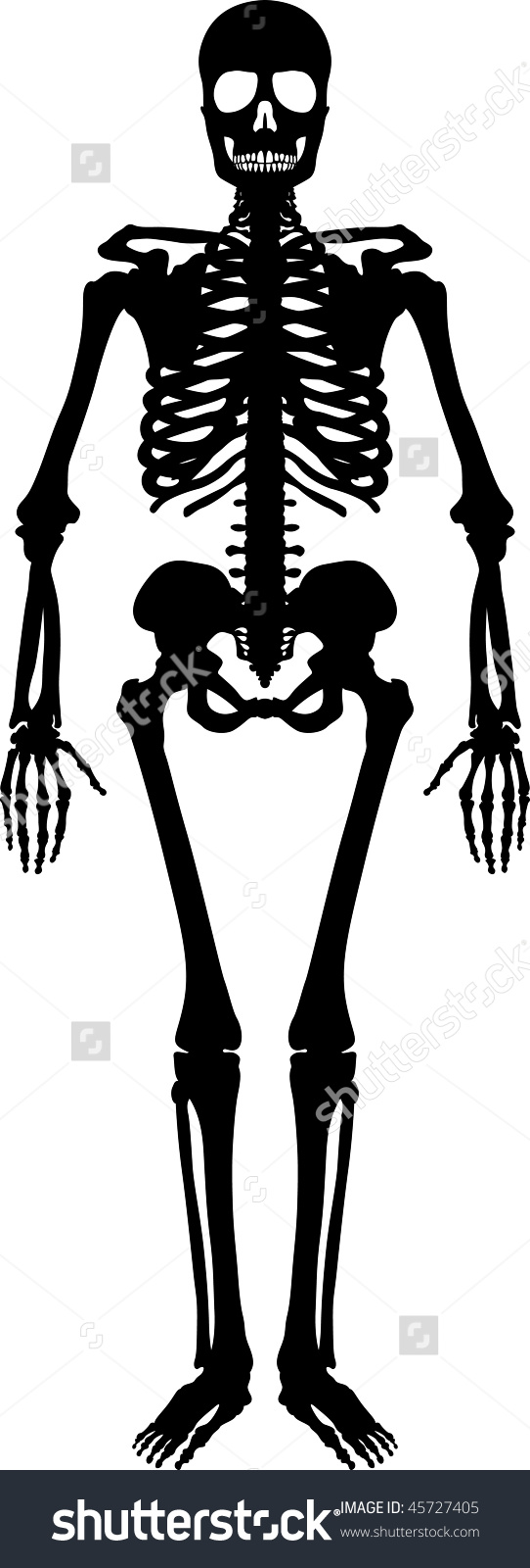 Skeleton Silhouette Clipart Clipground