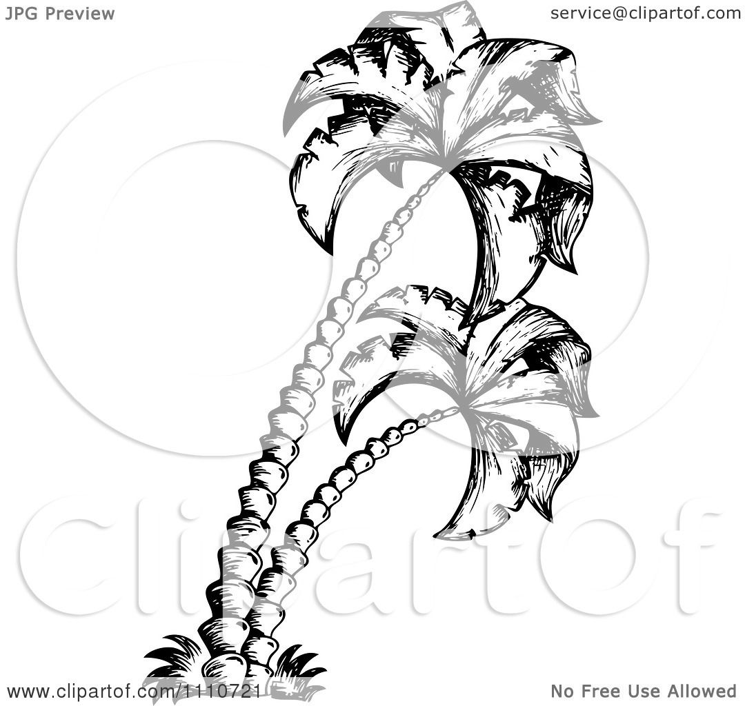 Clipart Black And White Sketched Palm Trees.