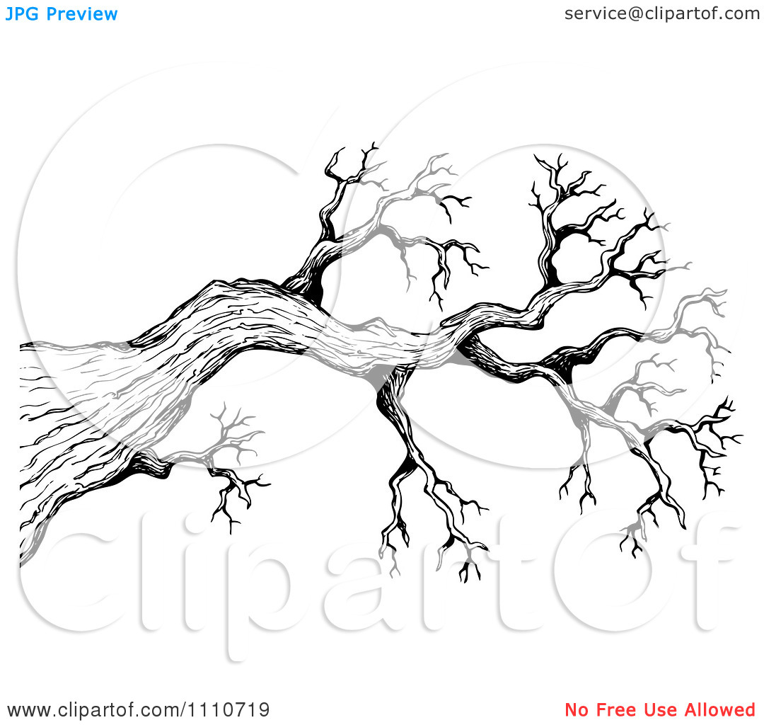 Sketched Tree Clipart.