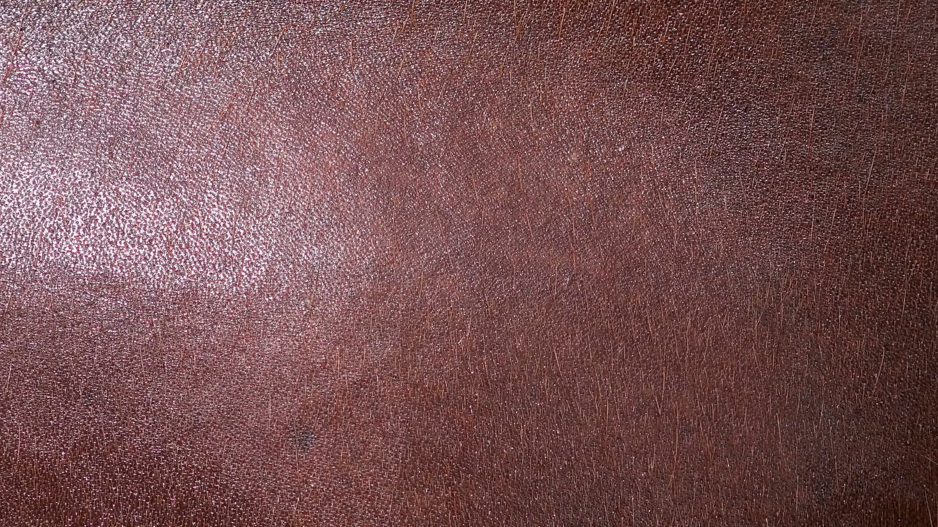 Download Skin Texture Png () png images.