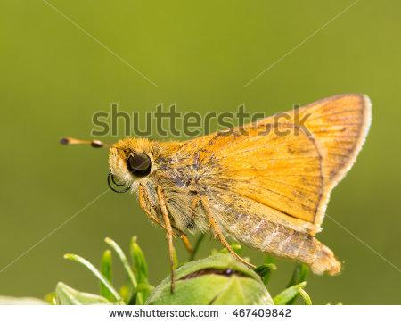 "tiny Butterfly"" Stock Photos, Royalty."