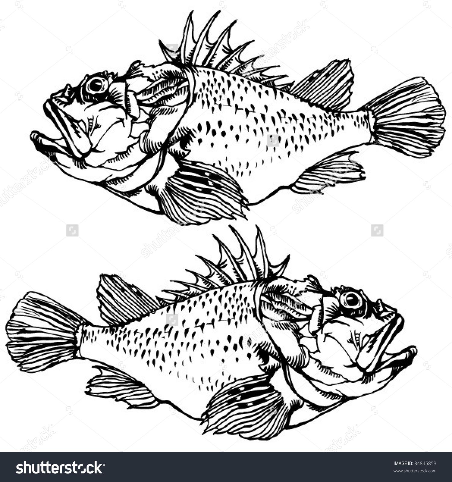 Scorpionfish Drawing Stock Vector 34845853.