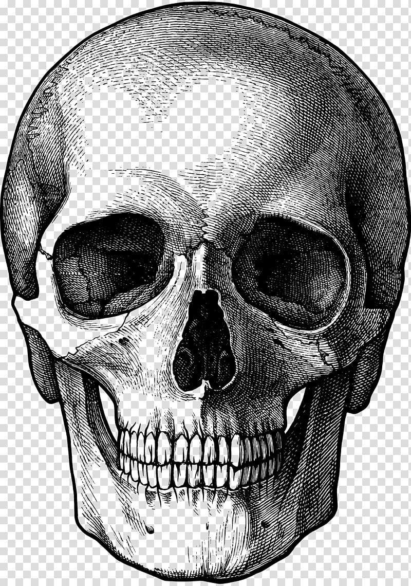 Drawing Skull Art, calavera transparent background PNG.