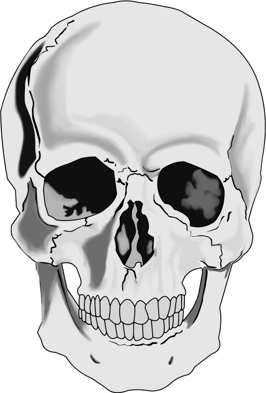 Skull human head clip art free vector for free download.