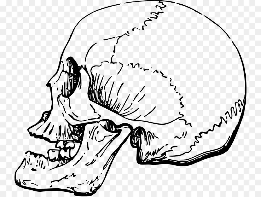 Download side view skull clipart Skull Clip art.