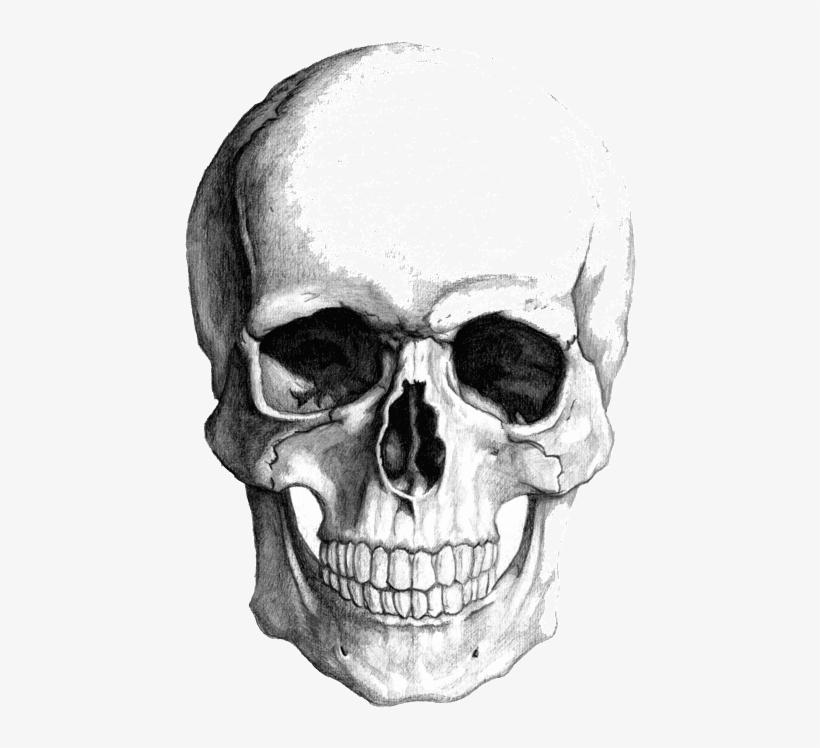 Skull Face Png (+).