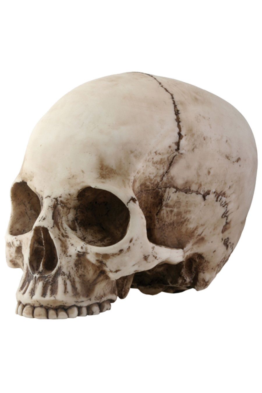 Skull PNG images free download.