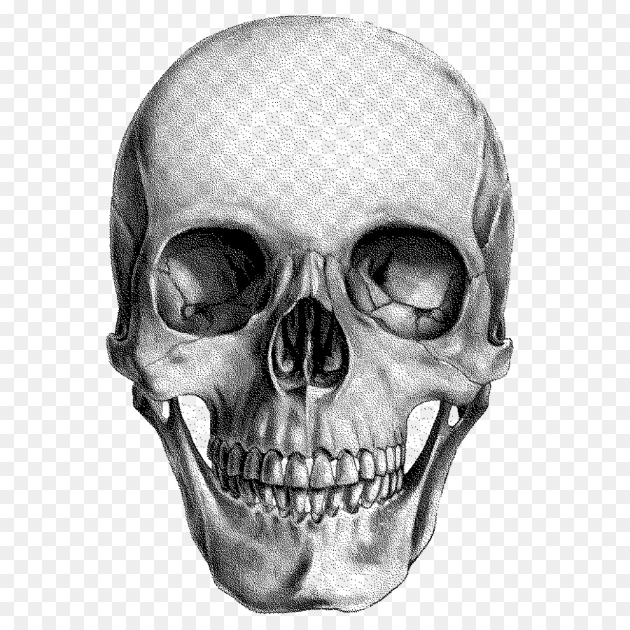 Skull Drawing Png & Free Skull Drawing.png Transparent.