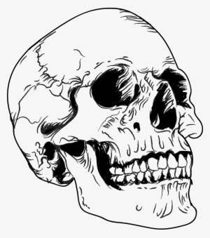 Skull Vector PNG, Transparent Skull Vector PNG Image Free.
