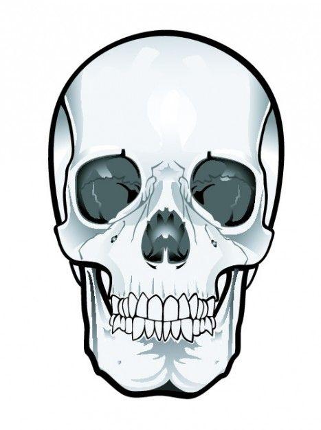 Frontal skull clipart.