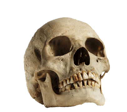 Human Skull Looking Up transparent PNG.