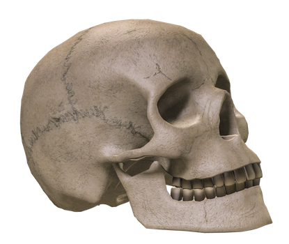 Skull PNG images free download.