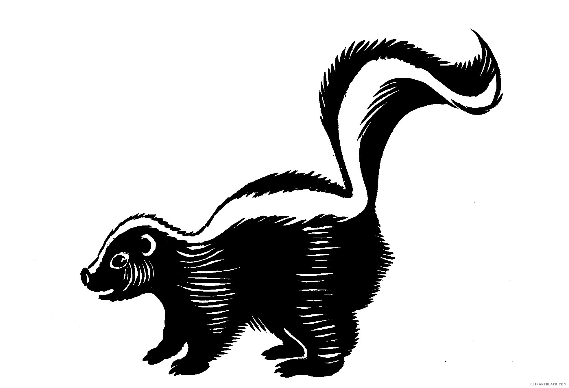 Skunk clipart black and white 4 » Clipart Station.